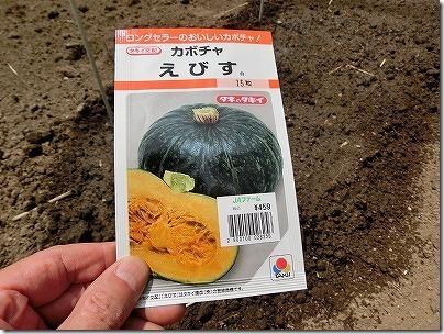 えびすかぼちゃの種