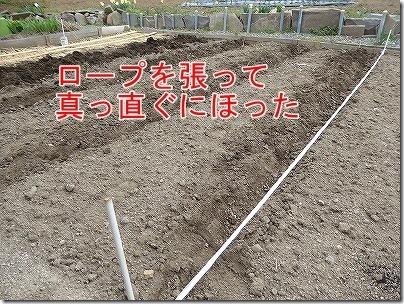 畝はロープを張って掘った