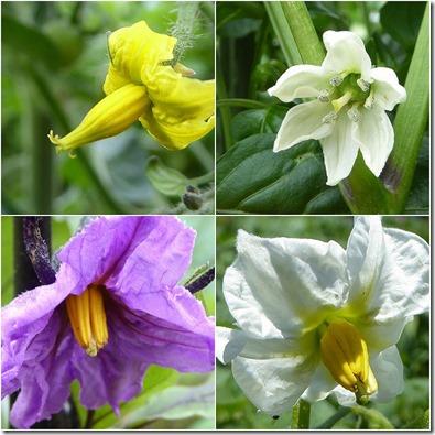 野菜の花は綺麗