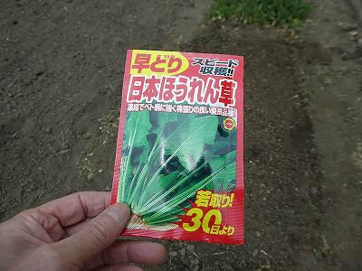 日本ほうれん草の種