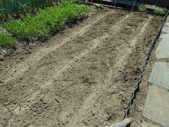 有機肥料をまいた。