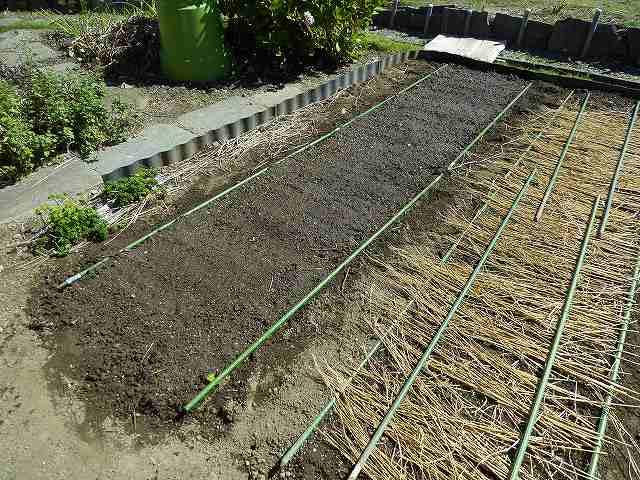 種を蒔いたあとにワラを敷いています。
