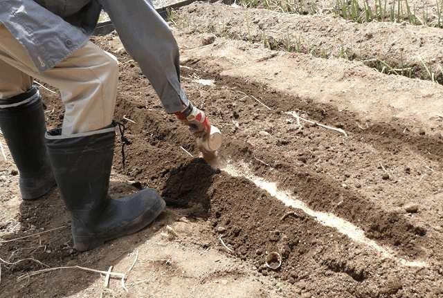 畝の端に肥料入れた
