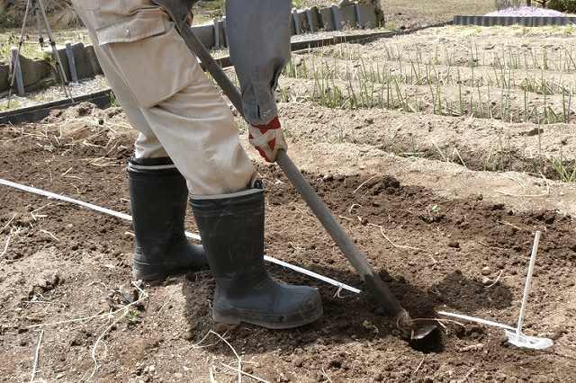 ロープを使って畝作り