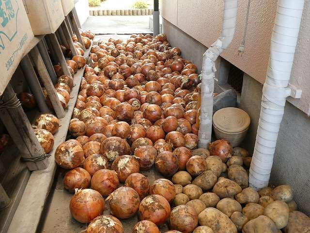 玉ねぎの収穫後の保存方法